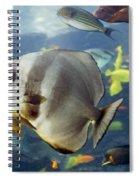 Longfin Batfish Spiral Notebook
