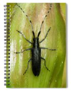 Longhorn Beetle Spiral Notebook