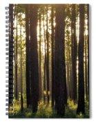 Longleaf Pine Forest Spiral Notebook