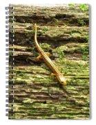 Longtailed Salamander Spiral Notebook