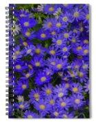 Longwood Hybrid Cineraria Spiral Notebook