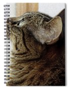 Look Out Window Tabby Cat Spiral Notebook