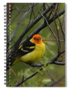 Looking At You - Western Tanager Spiral Notebook