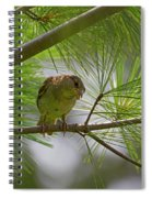 Looking Down - Common Sparrow - Passer Domesticus Spiral Notebook