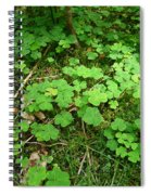 Looking For A Four-leaf Clover Spiral Notebook