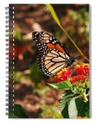 Looking For Nectar Spiral Notebook