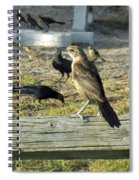 Looking Over The Frenzy Spiral Notebook