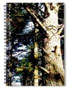 Looking Skyward Spiral Notebook