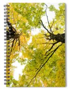 Looking Up At Fall Spiral Notebook