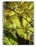 Looking Up To A Beautiful Sunglowing Fern In A Tropical Forest Spiral Notebook