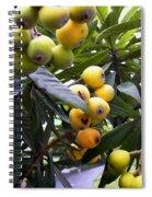 Loquat Exotic Tropical Fruit  2 Spiral Notebook