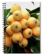 Loquat Exotic Tropical Fruit 4 Spiral Notebook