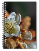 Loquat Flower Spiral Notebook