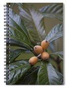 Loquat Fruit Spiral Notebook