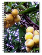Loquats In The Tree 1 Spiral Notebook