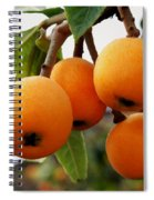 Loquats In The Tree 2 Spiral Notebook