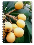 Loquats In The Tree 3 Spiral Notebook