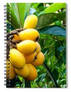 Loquats In The Tree 4 Spiral Notebook