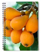 Loquats In The Tree 5 Spiral Notebook