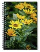 Loraine Sunshine 2 Spiral Notebook