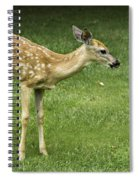 Lost Fawn Spiral Notebook