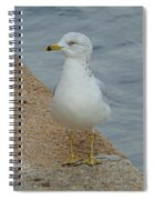 Lost Seagull Spiral Notebook