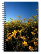 Lots Of Buttercups Against A Blue Sky Spiral Notebook