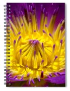 Lotus 12 Spiral Notebook