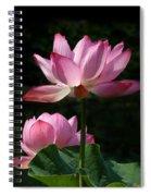 Lotus Beauties--upstaged Dl048 Spiral Notebook
