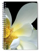 Lotus From Above Spiral Notebook