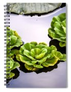 Lotus Pond Spiral Notebook