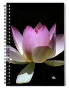 Lotus--purity 24o Spiral Notebook