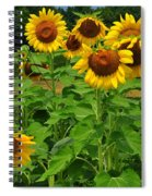 Louisa, Va. Sunflowers 3 Spiral Notebook