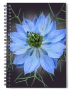 Love In A Mist Black With Light Spiral Notebook