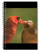 Love Is In The Air Cardinals Square Spiral Notebook