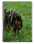 Lovely Billy Goat With Silky Black And Brown Fur Spiral Notebook