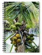 Lovely Bunch Of Coconuts Spiral Notebook