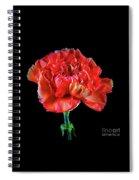 Lovely Carnation 12718-1 Spiral Notebook
