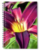 Lovely Day Lily Spiral Notebook