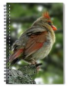 Lovely Female Cardinal Spiral Notebook