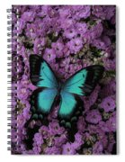 Lovely Green Winged Butterffly Spiral Notebook