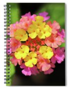 Lovely Lantana Spiral Notebook