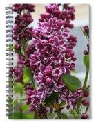Lovely Lilacs Spiral Notebook