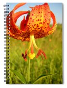 Lovely Orange Spotted Tiger Lily Spiral Notebook
