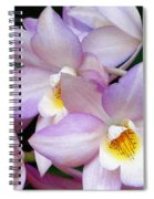 Lovely Orchid Family Spiral Notebook