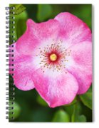 Lovely Pink Rose Spiral Notebook