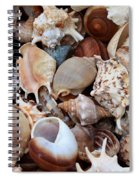 Lovely Seashells Spiral Notebook
