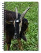 Lovely Up Close Look Into The Face Of A Pygmy Goat Spiral Notebook