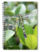 Lovely Wings Spiral Notebook