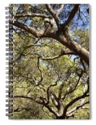 Low Angle View Of Trees In A Park Spiral Notebook